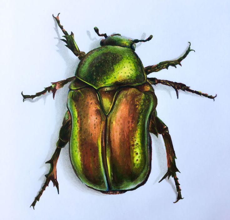 просто красивые рисунки жуков эту тарелочку