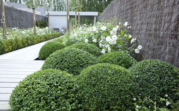 Ook in deze tuin staat de buxus centraal. De buxus is hier terug te vinden in bolvorm en als heg.