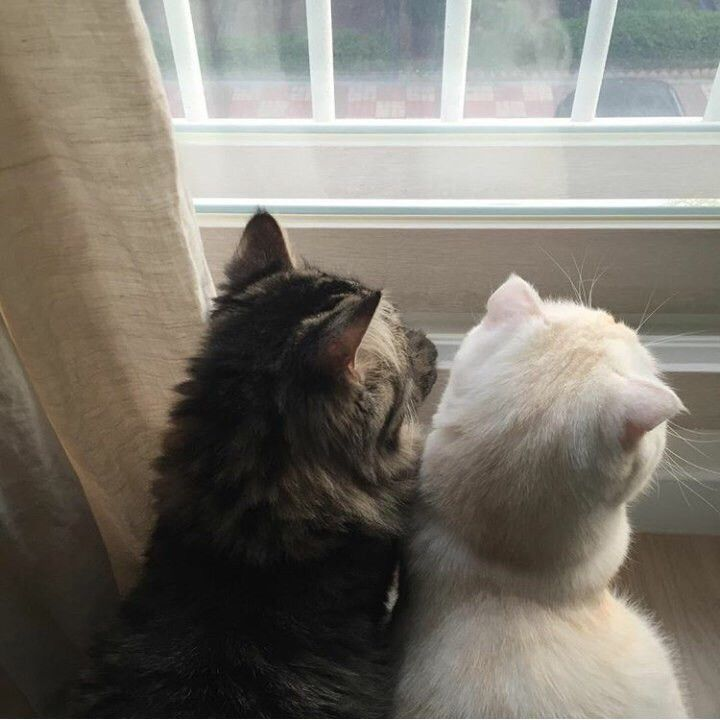 Babe and I looking out the window together during the winter season