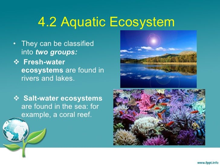 freshwater aquatic ecosystem In this lesson, you'll learn about the biodiversity of ecosystems based on water  you will discover that marine, freshwater and a mixture of salt.