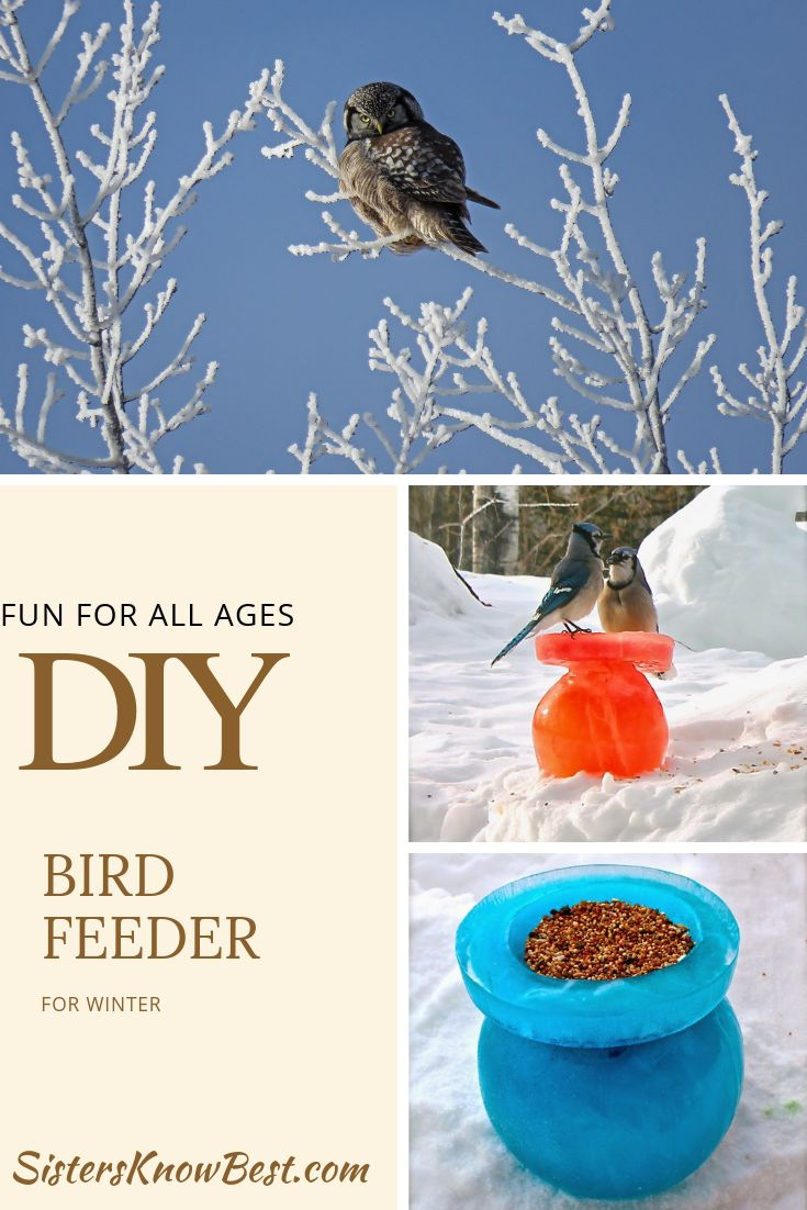 13+ Bird feeder craft for adults ideas