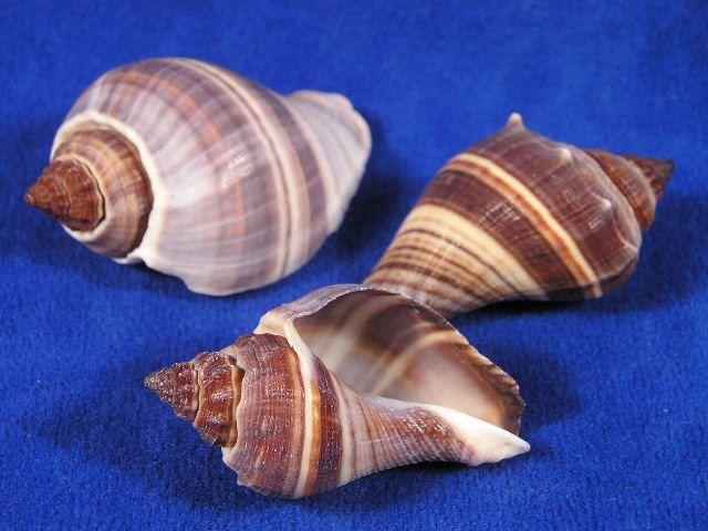 how to clean de shelled snails