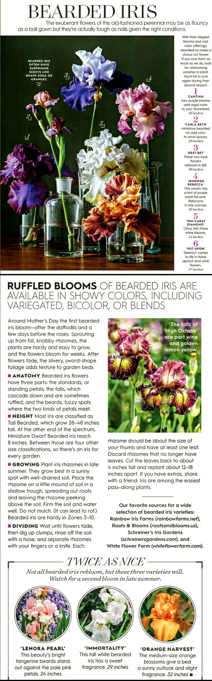 380 best Garden FYI images on Pinterest | Garden ideas, Gardening ...