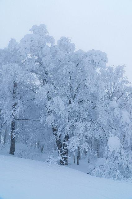 Mt.Zao Silver Frost 蔵王・樹氷
