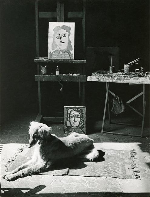 Brassai (Gyula Halasz), Le chien Kasbeck, atelier de Picasso, des Grands-Augustins, 2 Mai 1944