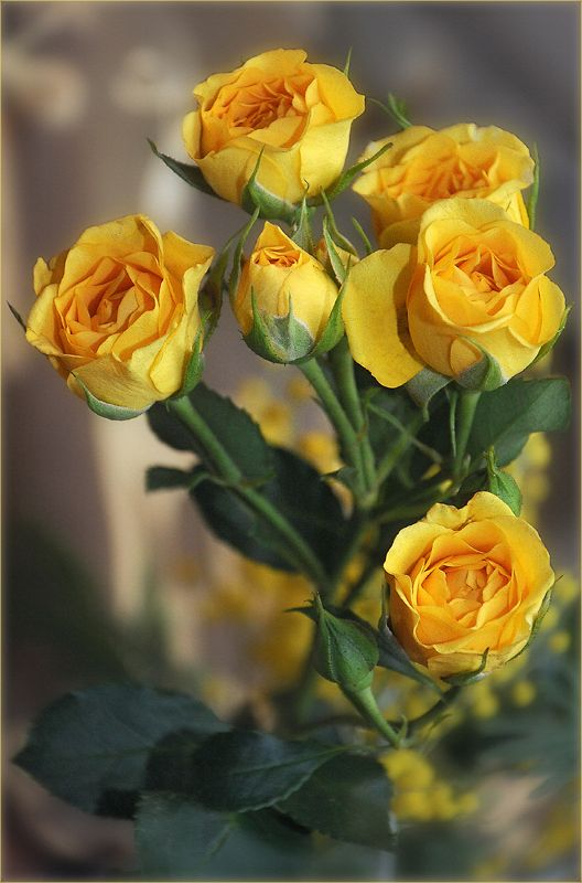 One of June's birth flowers is the Rose (yellow roses convey jealousy or a decrease in love) ~ Ana Rosa