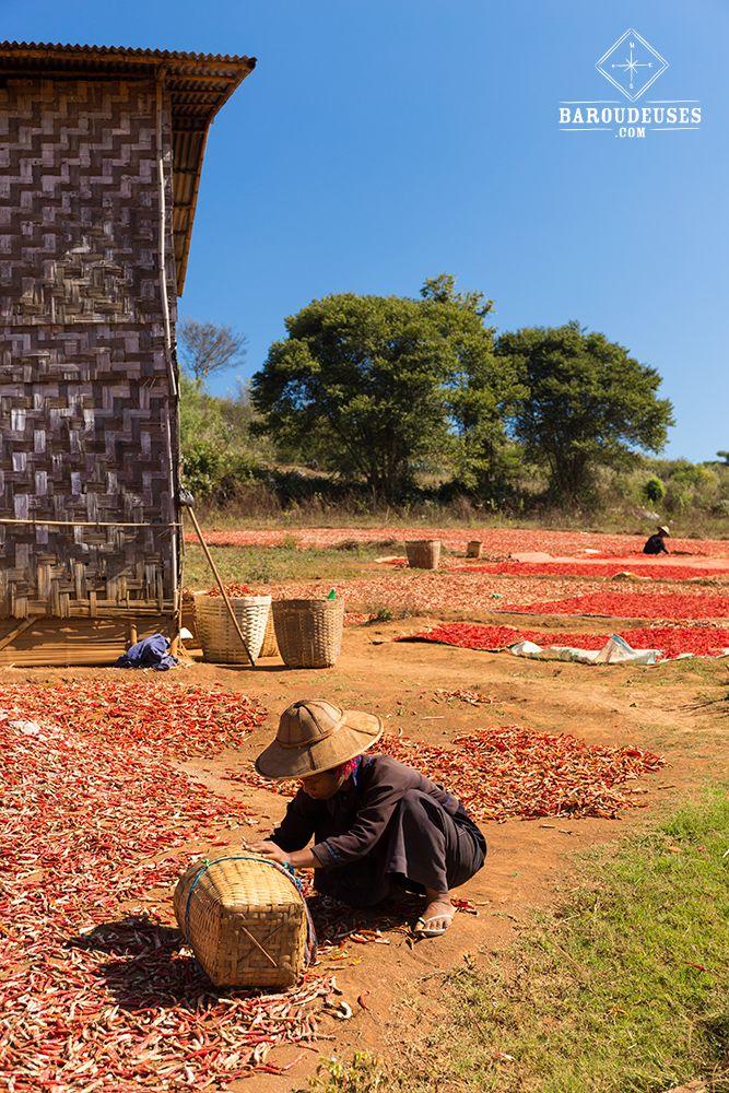 Piments qui sèchent_birmane - trek de Kalaw au Lac Inle