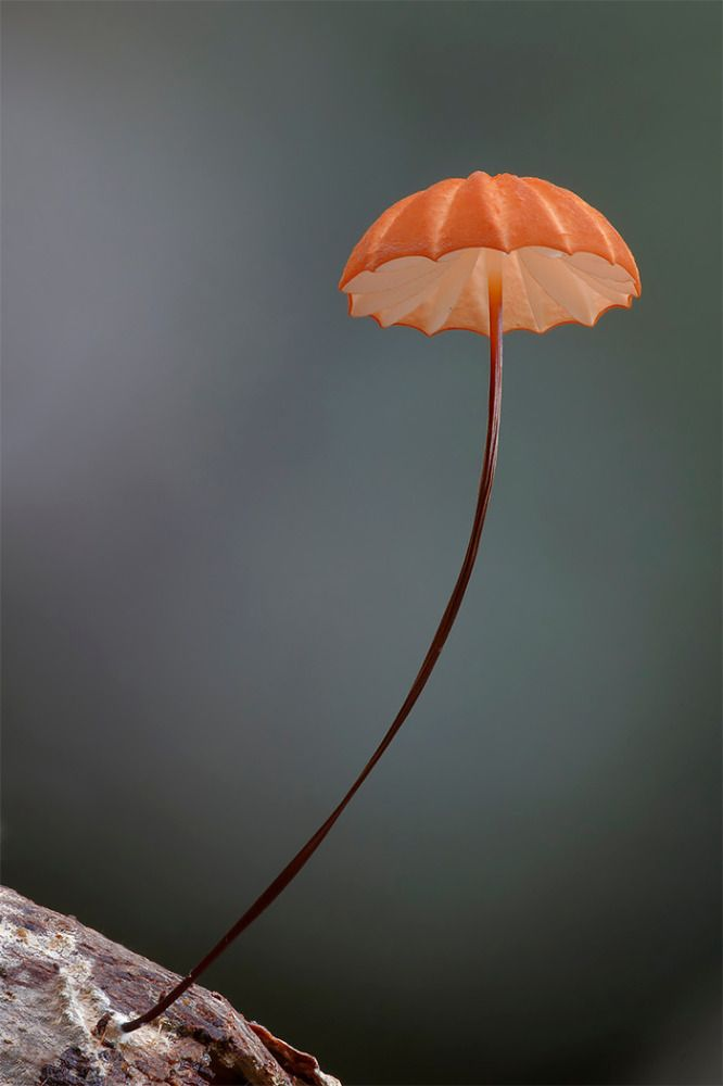 Amazing Fungi: Photography by Steve Axford | Inspiration Grid | Design Inspiration