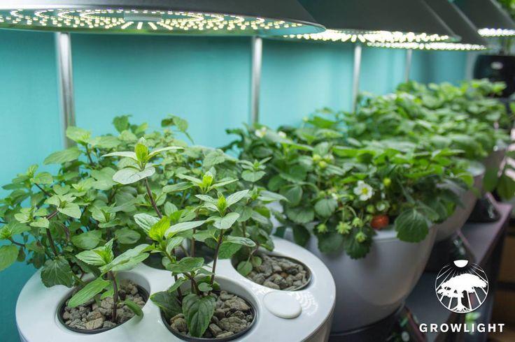 Prodej bytových doplňků v Plzni Co je >>> Growlight? Jsme technologická společnost zabývající se vývojem, výrobou a distribucí automatických hydroponických zahrad pro celoroční produkci ro…