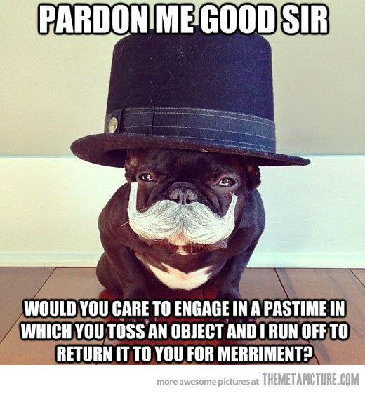 Tooo funny.. too bad everyone knows frenchies would much rather watch you run around and fetch a ball then do it themselves haha