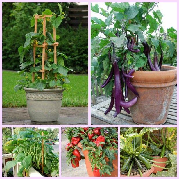 20 Best Vegetables To Grow In Pots Growing Vegetables Home