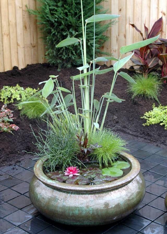 jardin aquatique en pot- une mini-oasis pour la terrasse de jardin ou le balcon