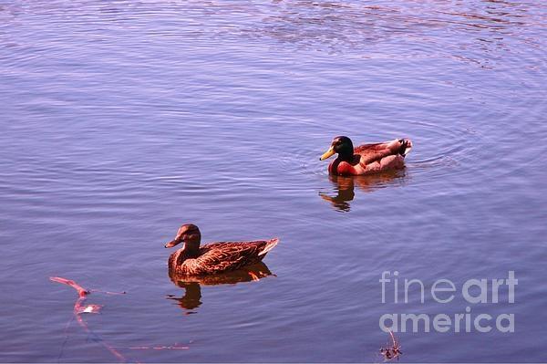 Ducks at Schubie Park in Dartmouth last Sunday.