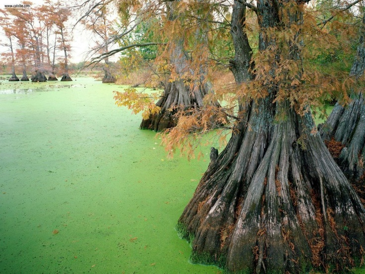 Reelfoot Lake Near Tiptonville in Tennessee.