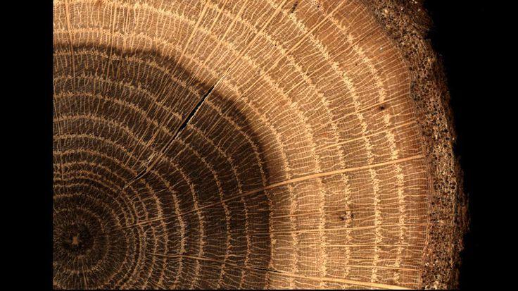 Интересный факт о древесине💡 Бук🌳 Древесина бука хороша в обработке — ее легко гнуть, она легко удерживает крепления и устойчива к деформациям. Проблемы начинаются позже. Бук сильно поглощает влагу из окружающей среды. Чтобы изделие не перекосилось, его нужно как можно быстрее покрывать защитными средствами. Например, лаком.  ИсточникDIY Академия Bosch #loft #loftstyle #wooddesign #interior #дизайнинтерьера #мебельназаказ #экостиль #лофт#table #барнаястойка #мебелькалининград #калининград…