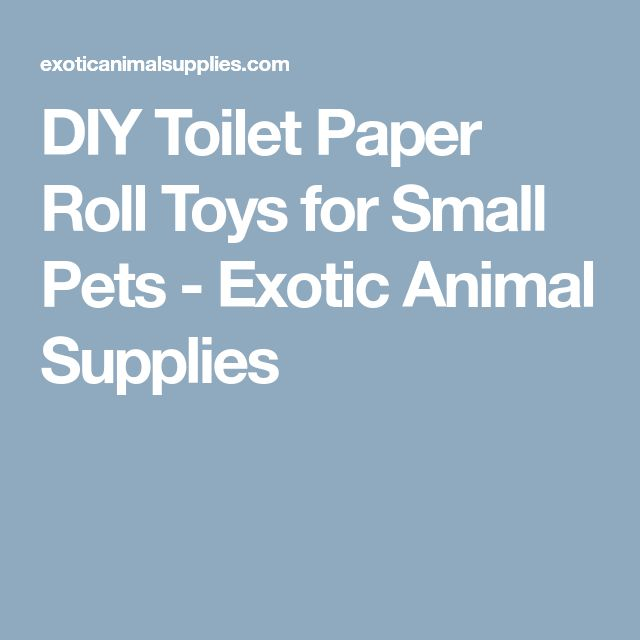 DIY Toilet Paper Roll Toys for Small Pets - Exotic Animal Supplies