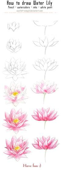 131 - How to draw and paint Waterlily by……_来自ljia的图片分享-堆糖