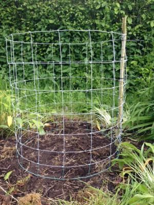 Growing Pumpkins & Squashes Vertically   Permaculture Magazine