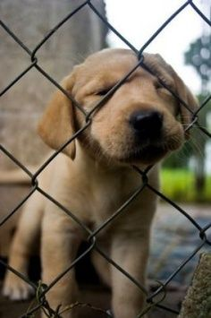 Must. Get. Through. Fence. Soo adorable!