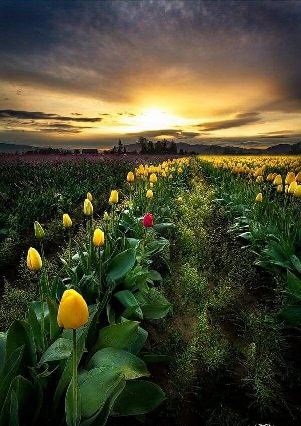 Campo Florido | Natureza bela, Lindas paisagens, Fotografia da ...