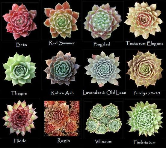 Assorted types of succulents #8