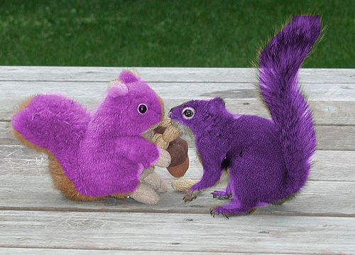 Purple Squirrels Two