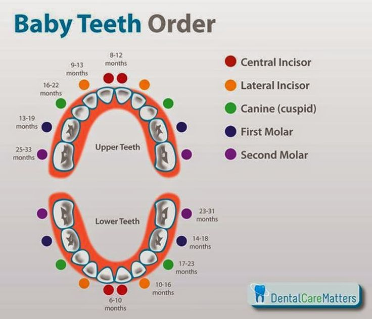 Baby Teeth Order: Ben's first tooth came in today! (bottom central incisor)
