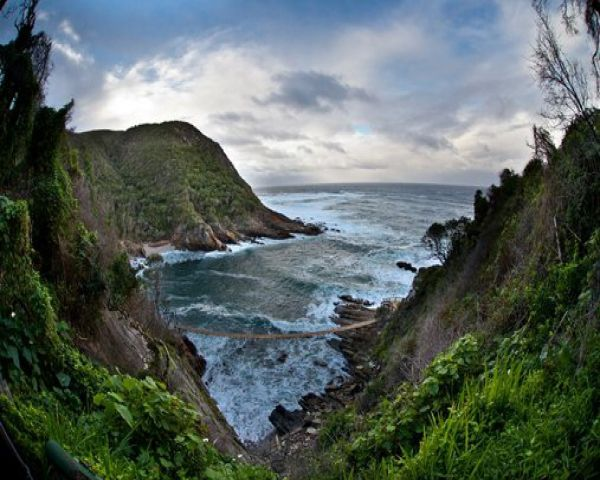"""Where the booming breakers of the Indian Ocean relentlessly pound rocky shores, where temperate high forest and fynbos roll down to the sea in an unspoilt verdant carpet, where ancient rivers carve their paths to the ocean down rocky ravines.    This, """"the place of many waters"""", is the Tsitsikamma Section of Garden Route National Park. The coastal reserve stretches some 5 km out to sea, protecting a wonderland of inter-tidal, reef and deepsea life. Dolphins frolic in the breakers a..."""