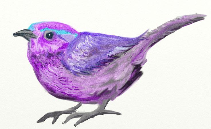 Little Bird - February 24, 2014