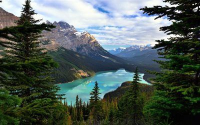 Scarica sfondi banff, monte patterson, montagne, albert, canada, peyto lake, foresta, rocce, lago di montagna, alberta