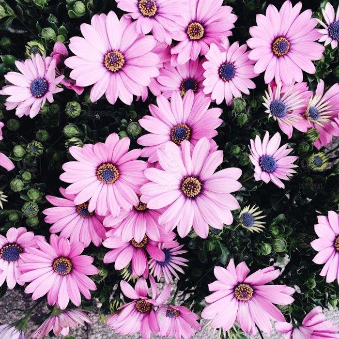 1001 Images Pour Un Fond D Ecran Fleur Magique Inspiration
