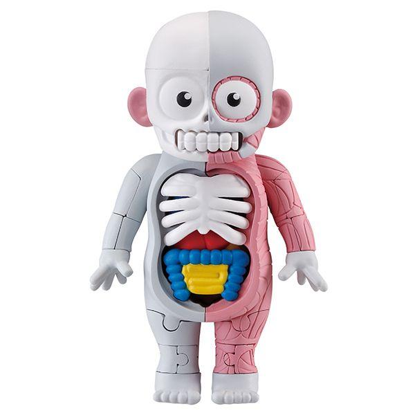 放課後の怪談シリーズ 理科室の模型復元パズル 人体模型|商品情報|メガトイ|メガハウスのおもちゃ情報サイト