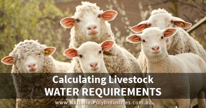Calculating Livestock Water Requirements for Your Farm
