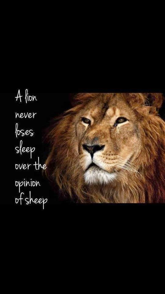 lion vs. sheep | Quotes, Posters, Illustrations and Such ...