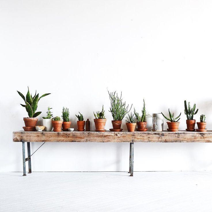 Les 10 meilleures images à propos de INDOOR PLANTS sur Pinterest