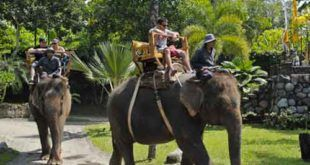 Bali Zoo Exclusive Long Trek Elephant Ride Expedition
