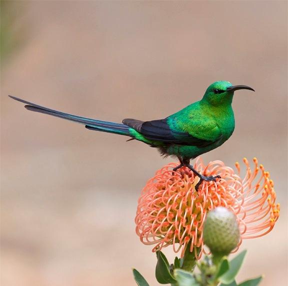 Wild Birds In Africa Birding Thursday - 201...