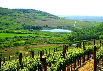 Tokaj-Hegyalja - történelmi borvidék kultúrtáj - Hungary