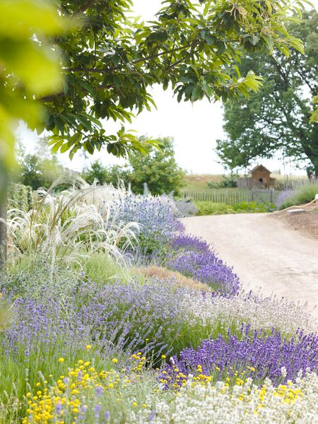 Italy: DG, lavender, with grasses. colors i love most in a garden. lavender one of my favorite!!