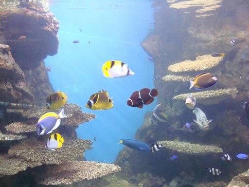 Las 25 mejores ideas sobre peces de agua dulce en for Peces colores agua fria
