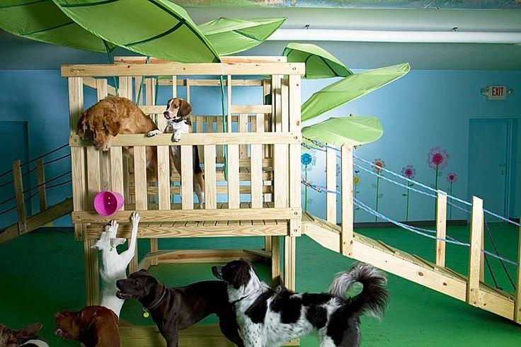 Doggie Daycare with huge tree house! www.delawarepetstuff.com