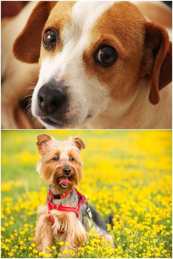 Analyze This On Smart Dog Training In 2020 Dogs Dog Training