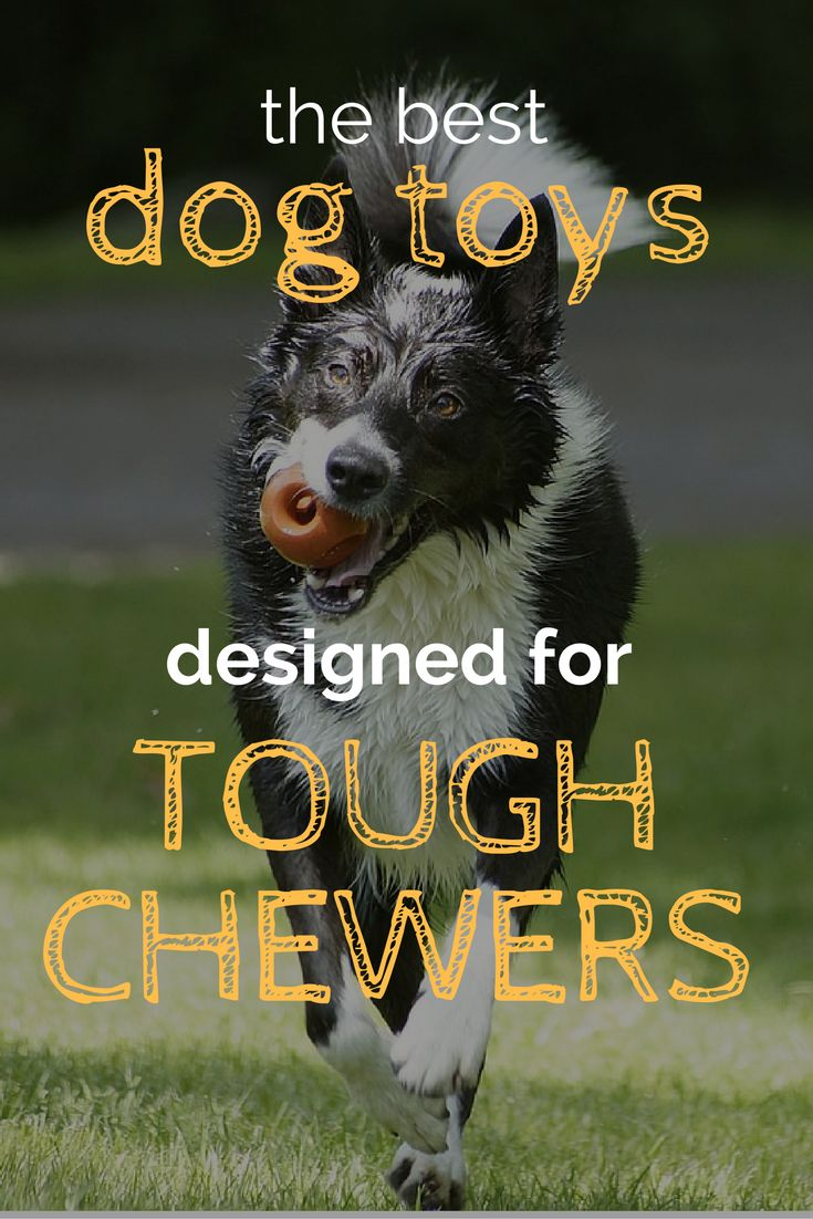 19 Best Indestructible Dog Toys For Aggressive Chewers