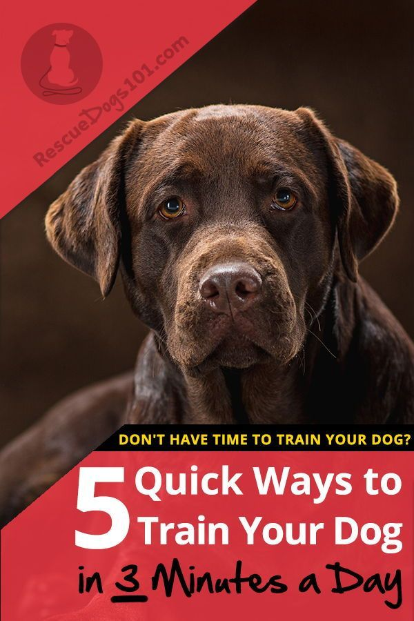 5 Quick Ways To Train Your Dog In 3 Minutes A Day Training Your