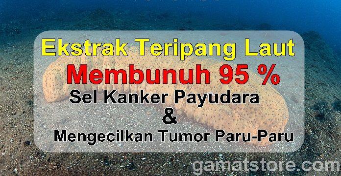 Teripang Sel Kanker Payudara Sel Tumor Paru https://goo.gl/j49tBi http://gamatstore.com/teripang-sel-kanker-payudara-sel-tumor-paru/