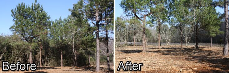 No job is too big or too small for B&E Services. We are a Veteran owned and operated company specializing in Tree Removal Jacksonville FL, Forestry Mulching, Land Clearing, Site Preparation, Demolition and more. Contact us today for a FREE quote. For More Information Visit http://bandeservice.com/
