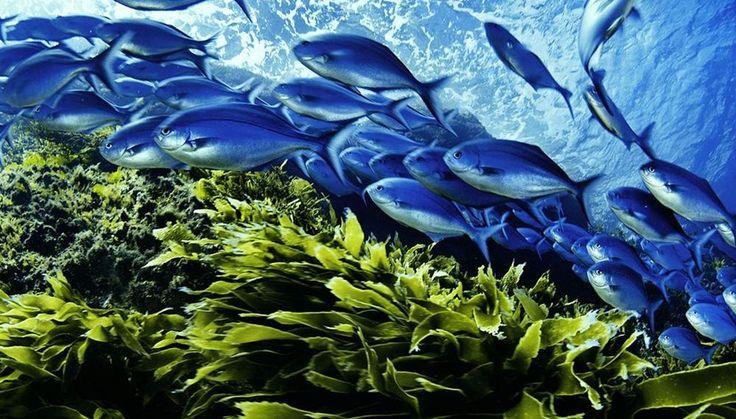 Síntomas de que un pez está enfermo - http://www.depeces.com/sintomas-pez-esta-enfermo.html