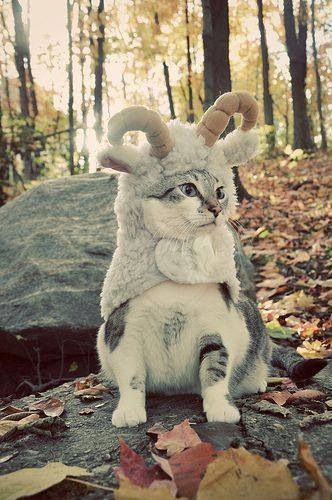 Now I've seen it all! Lol!: Goats, Cats, Animals, Costumes, Pet, Mountain Goat, Funny, Kitty
