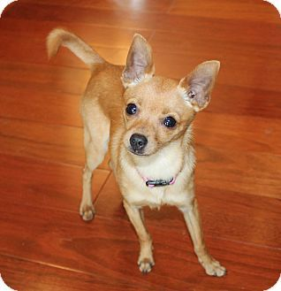Dog Adoption Bellingham Ma