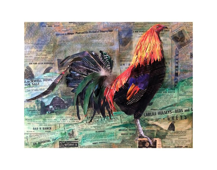 Gamefowl rooster